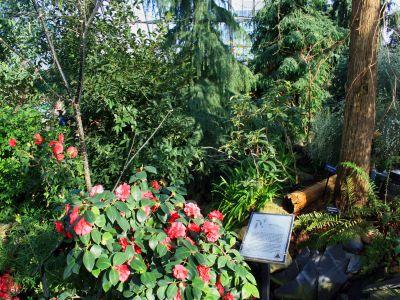 Inside-of-muttart-conservatory-1